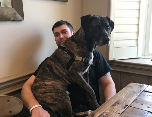 Meet the shelter dogs working at the Manor: Flash edition